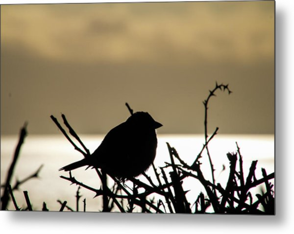 Sunset Bird Silhouette Metal Print