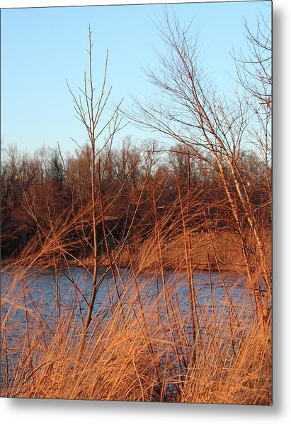 Sunset Field Over Water Metal Print