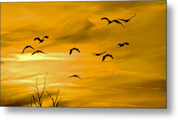 Sunset Fliers Metal Print