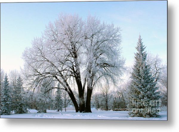 Sunset Frost Metal Print