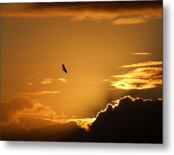Sunset Glide Metal Print by Mark Alan Perry