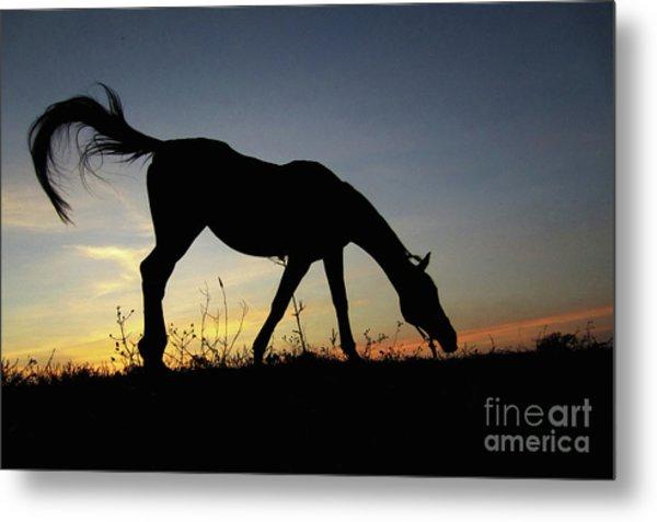Sunset Horse Metal Print