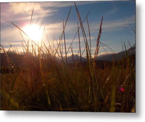 Sunset In Grass Metal Print by Sidsel Genee