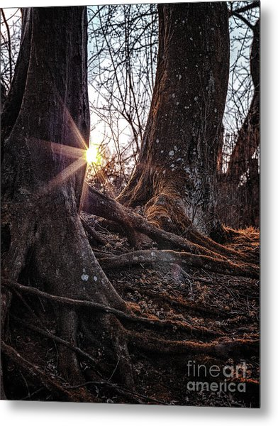 Sunset In The Woods Metal Print
