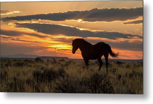 Sunset On The Mustang Metal Print