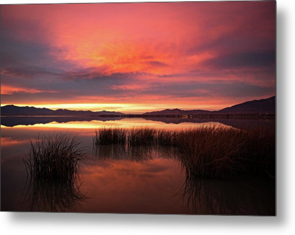 Sunset Reeds On Utah Lake Metal Print