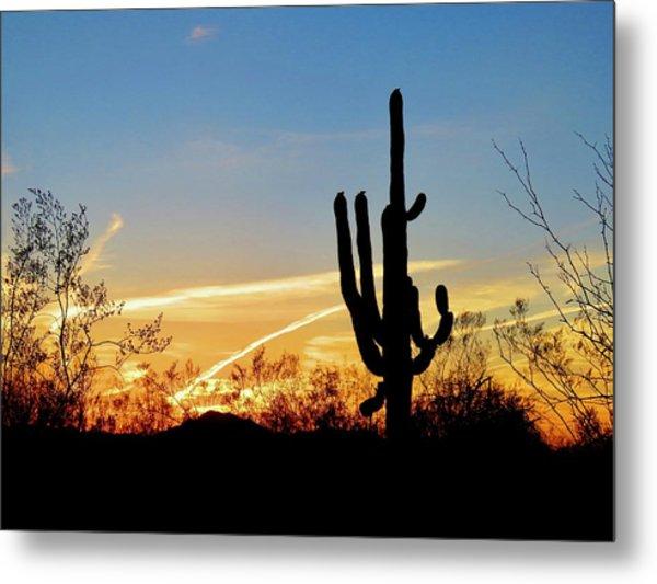 Sunset Saguaro In The Spring Metal Print