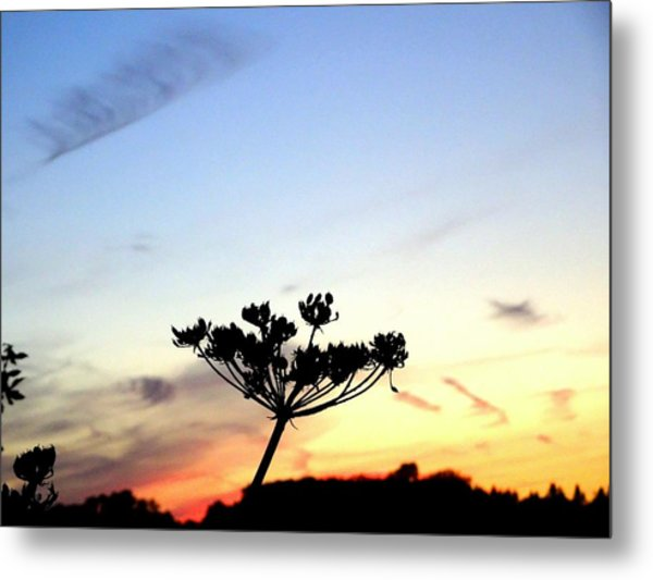 Sunset Seedhead Silhouette  Metal Print