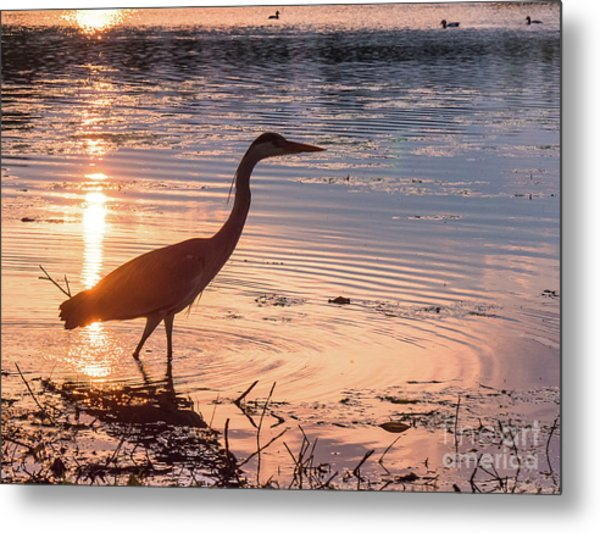 Sunset Sentinel Metal Print by Paul Farnfield