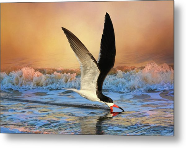 Sunset Skimming Metal Print