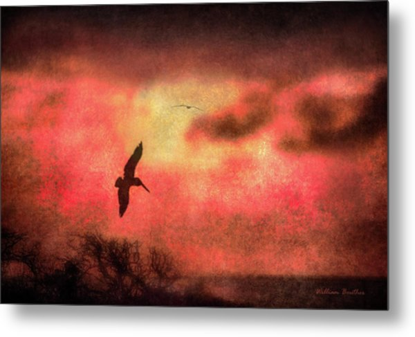 Sunset Soaring II Metal Print