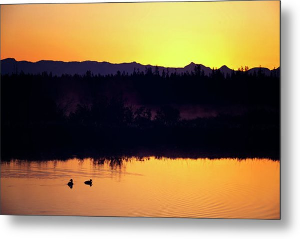 Metal Print featuring the photograph Sunset Swim by Sue Collura