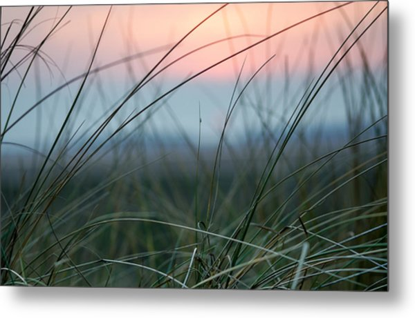 Sunset  Through The Marsh Grass Metal Print