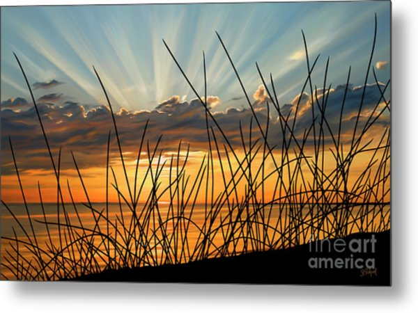 Sunset Thru The Grass Metal Print