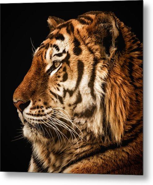 Sunset Tiger Metal Print