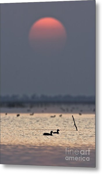 Sunset With Coots Metal Print