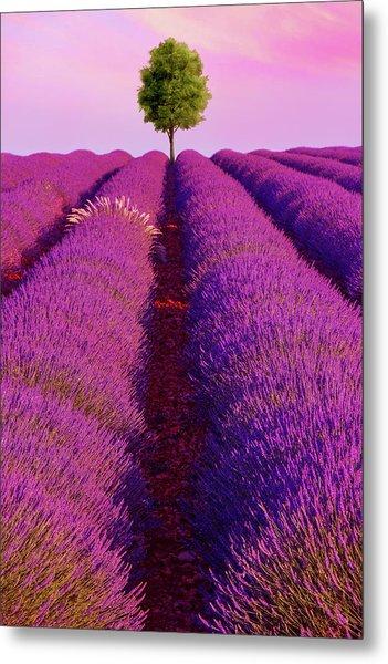 Sunsets Are Purple Metal Print