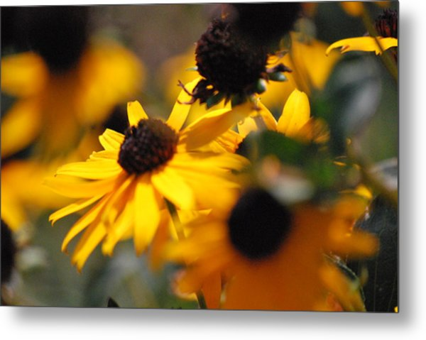 Sunshine And Daisies Metal Print by Trudi Southerland