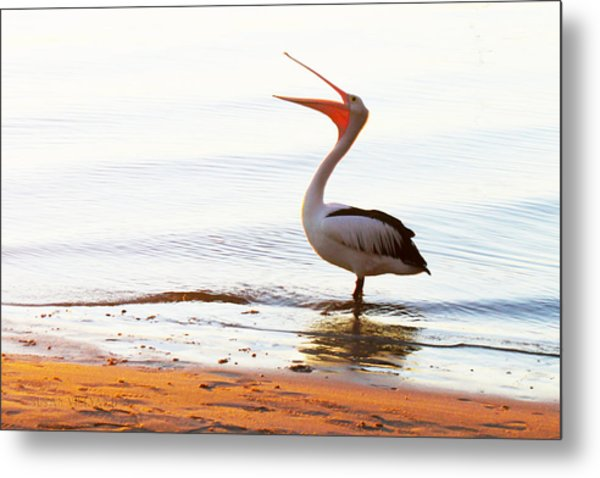 Sunshine Coast Pelican Metal Print