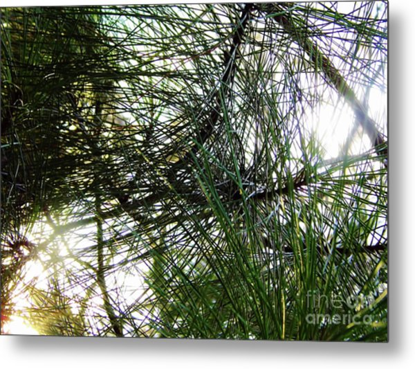 Sunshine Through Pine Needles Metal Print