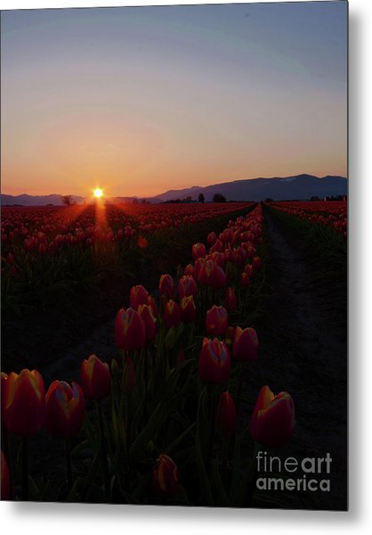 Sunstar Metal Print by Nichole Peterson