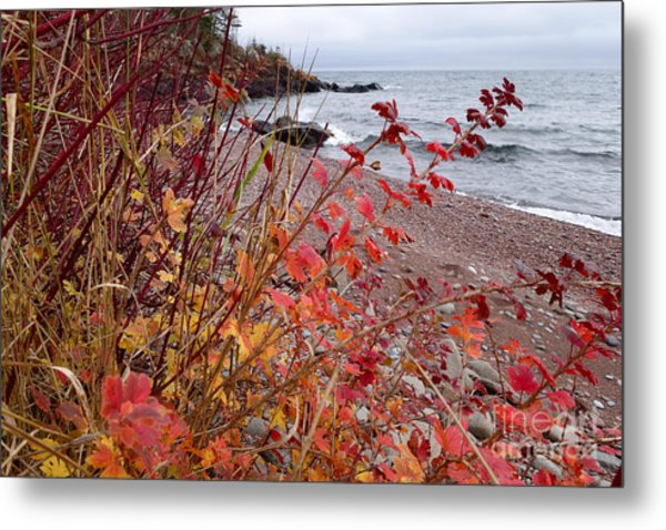 Superior November Color Metal Print