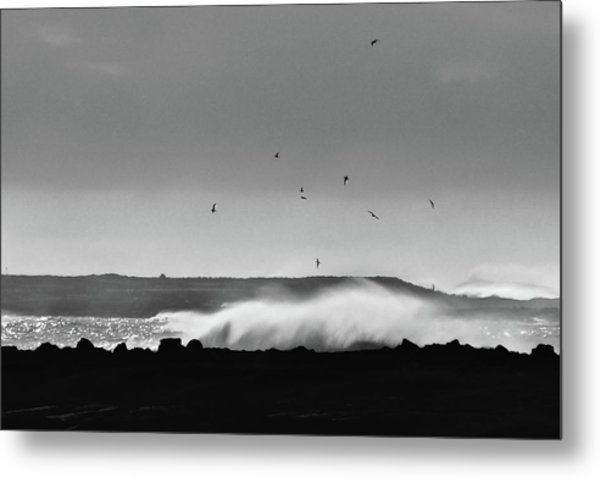Surf Birds Metal Print
