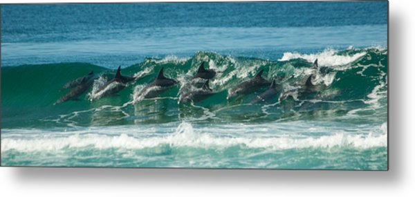 Surfing Dolphins 4 Metal Print