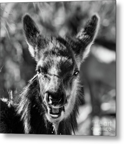 Surprise, Black And White Metal Print