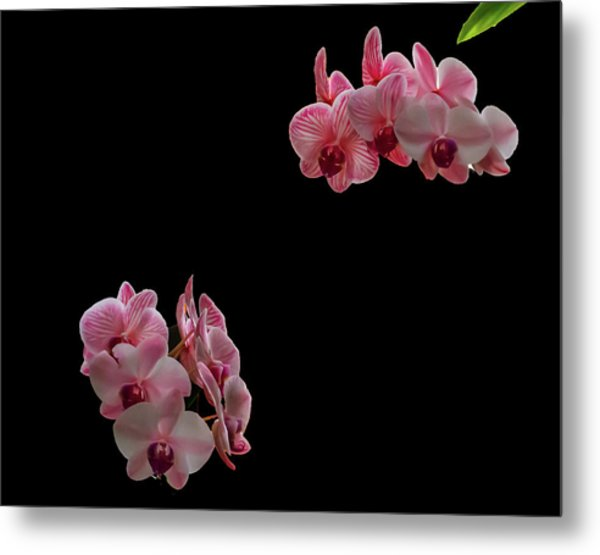 Suspended Orchids Metal Print