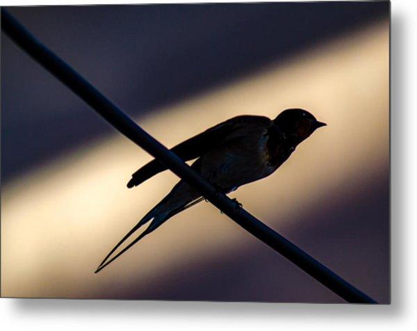 Swallow Speed Metal Print