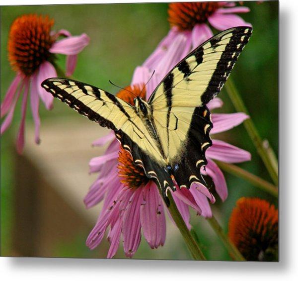 Swallowtail 1 Tn Metal Print