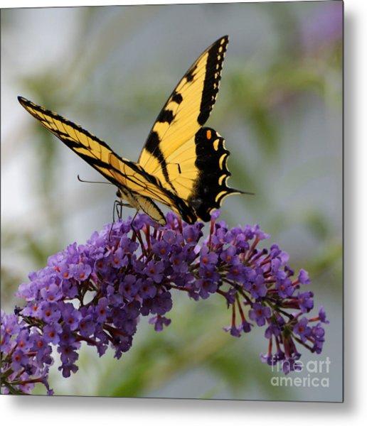 Swallowtail 2 Metal Print