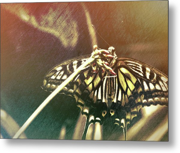 Swallowtail Metal Print by JAMART Photography