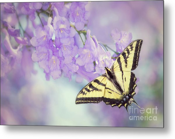 Swallowtail On Purple Flowers Metal Print