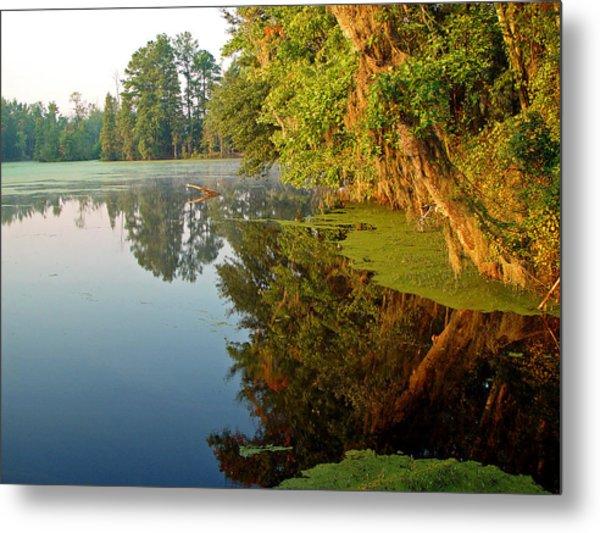 Swamp Pond Metal Print by Michael Whitaker