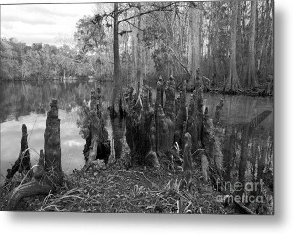 Swamp Stump Metal Print