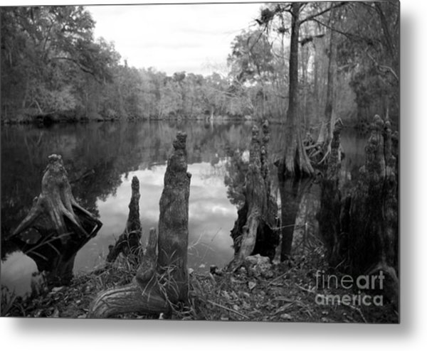 Swamp Stump II Metal Print