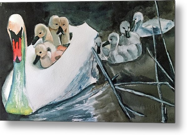 Swan And Cygnets Metal Print
