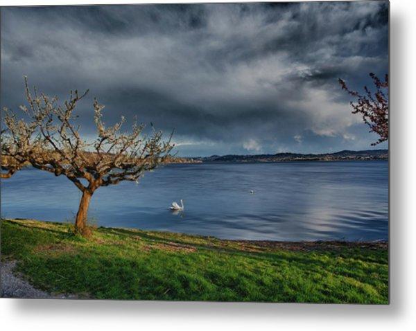 Swan And Tree Metal Print