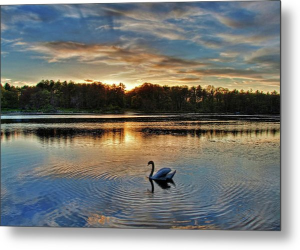 Swan At Sunset Metal Print