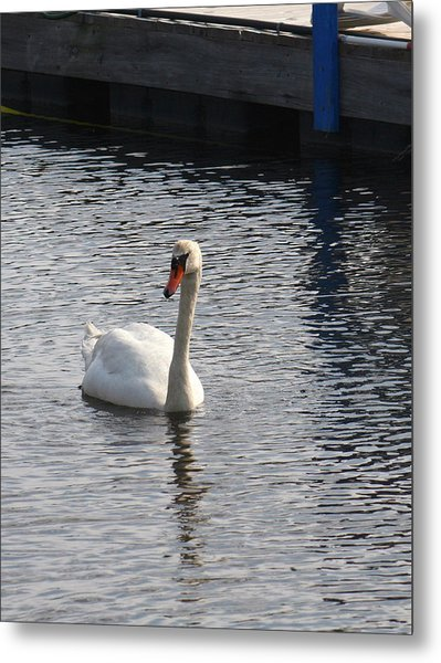 Swan Metal Print by Gerald Mitchell