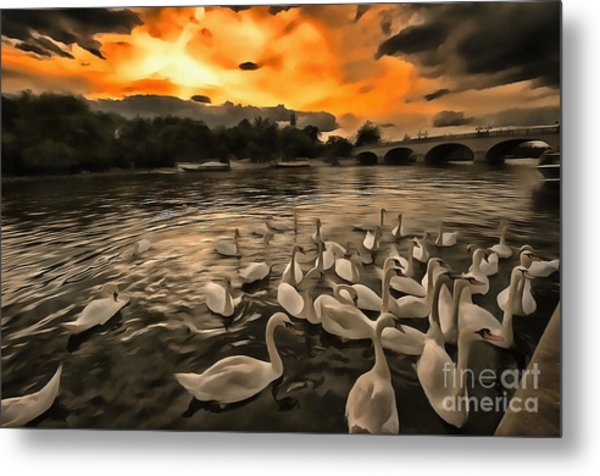 Swan Gloaming Kingston U K Metal Print