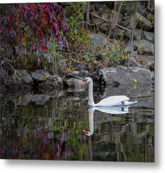 Swan In Autumn Reflections Metal Print