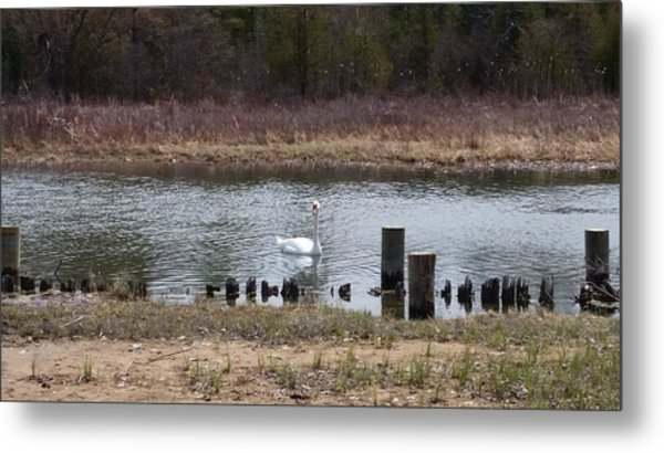 Swan Of Crooked River Metal Print