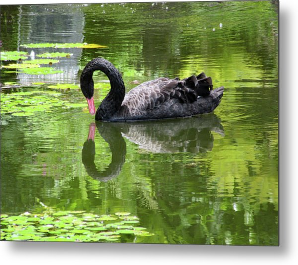 Swan Of Hearts Metal Print