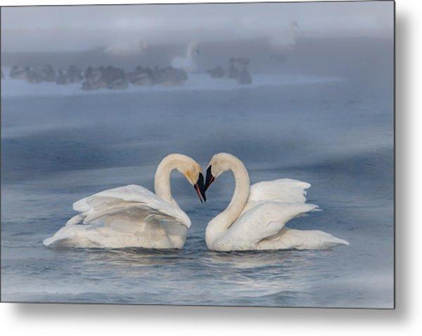 Swan Valentine - Blue Metal Print