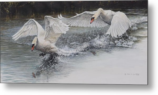 Metal Print featuring the painting Swans In Dispute by Alan M Hunt