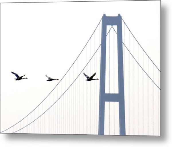 Swans In Line Metal Print by Toon De Zwart
