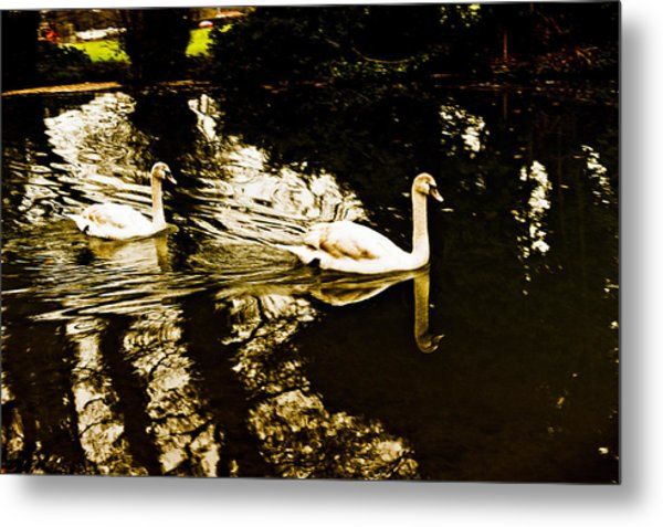 Swans On River Wey Metal Print